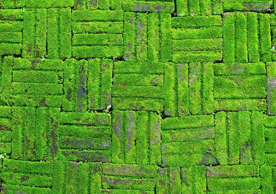 groene-aanslag-op-muur-verwijderen